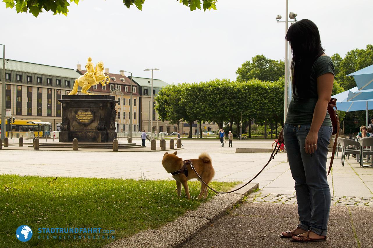 goldener-reiter-hauptstrasse-dresden-hund