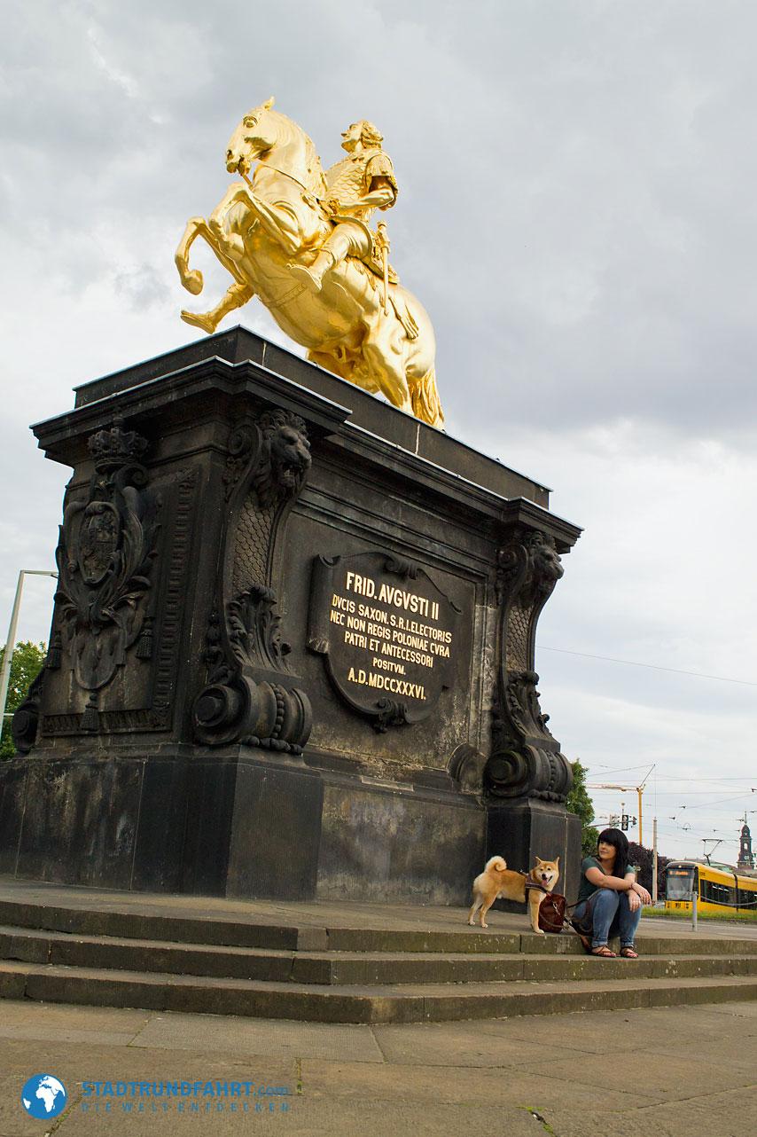 goldener-reiter-hund
